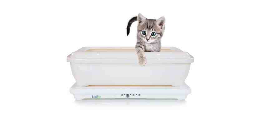 talio cats kickstarter
