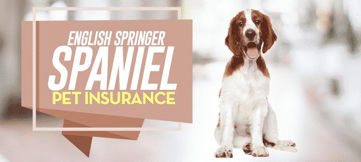 english springer spaniel pet insurance