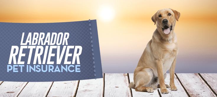 labrador retriever pet insurance