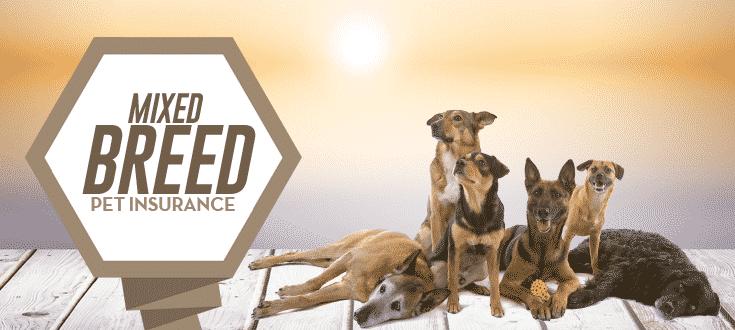 mixed breed pet insurance