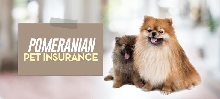 pomeranian pet insurance