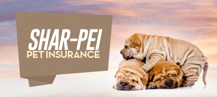 shar-pei pet insurance