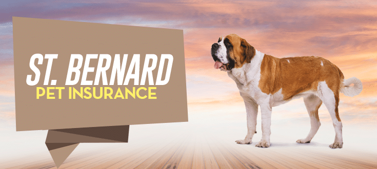 st. bernard pet insurance