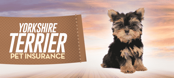 yorkshire terrier pet insurance