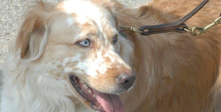 Benign Prostatic Hyperplasia in Dogs