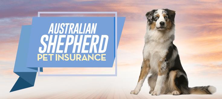 australian shepherd pet insurance