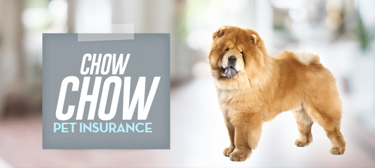 chow chow pet insurance