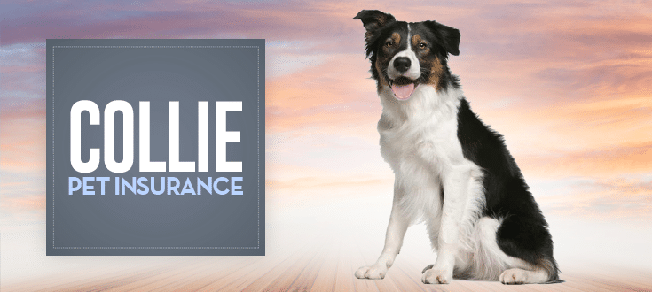 collie pet insurance