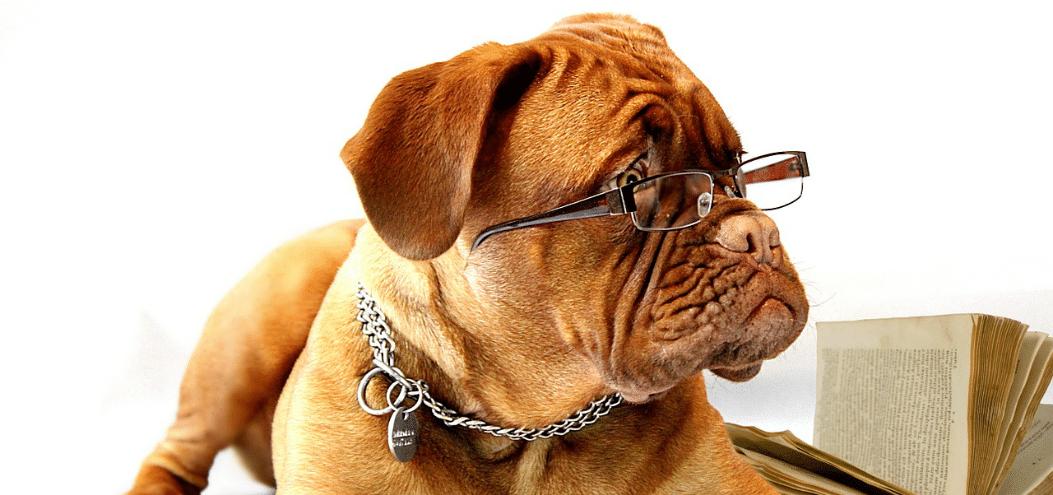 dog lessons