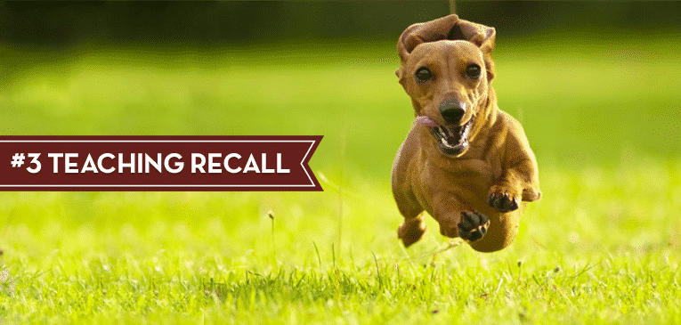 dog treat recall