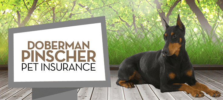 doberman pet insurance