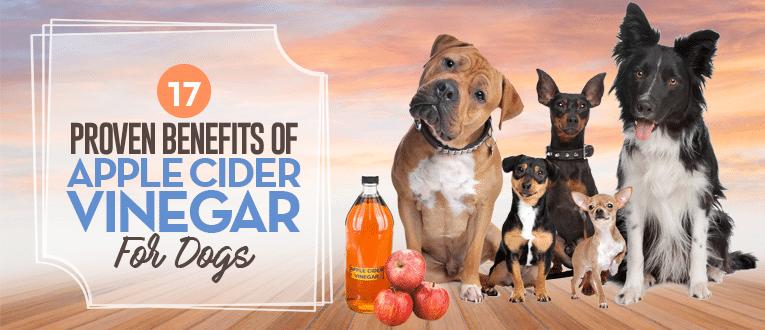Apple Cider Vinegar Dog Ear Rinse