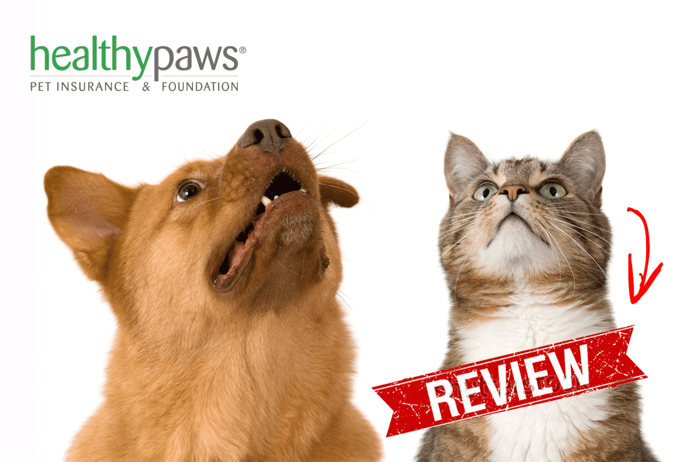 healthy paws reviews