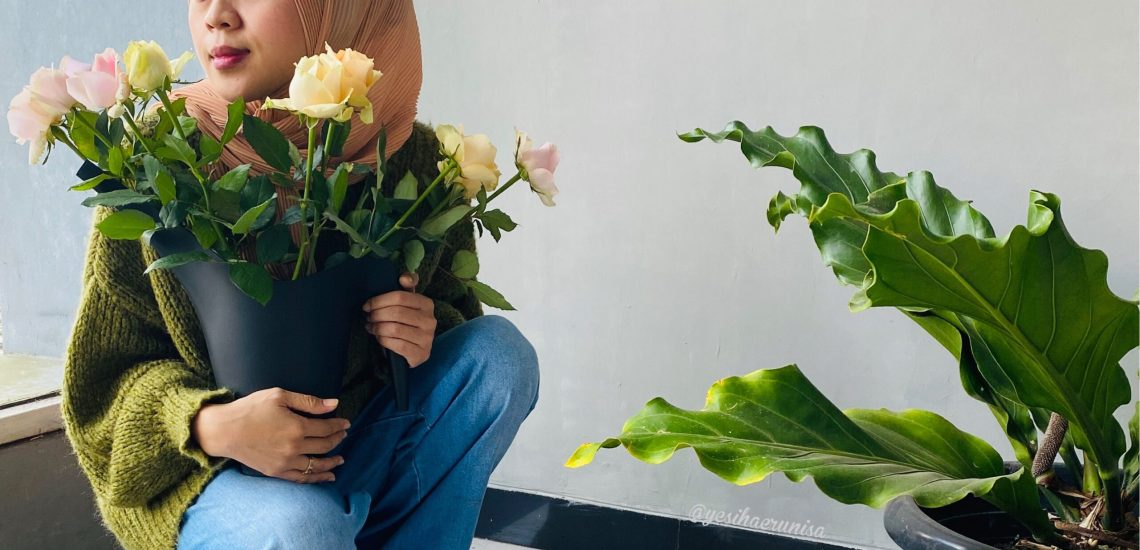 mawar holland