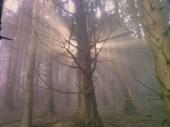 Горите на Витоша
