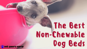 The Best Non Chewable Dog Beds