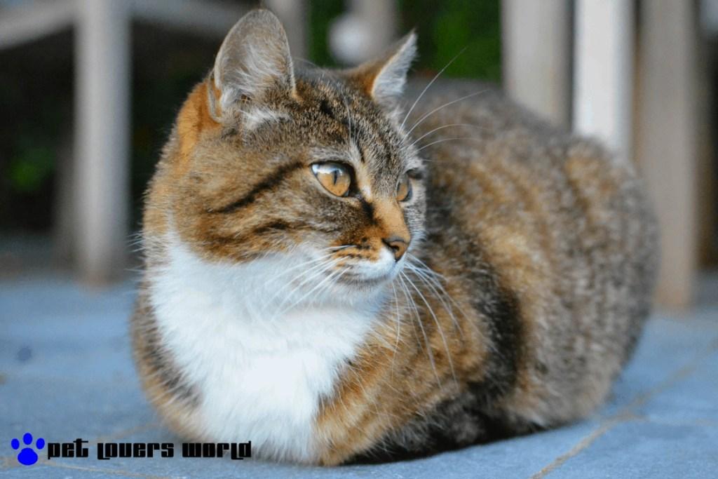 Best Outdoor Cat House Reviews