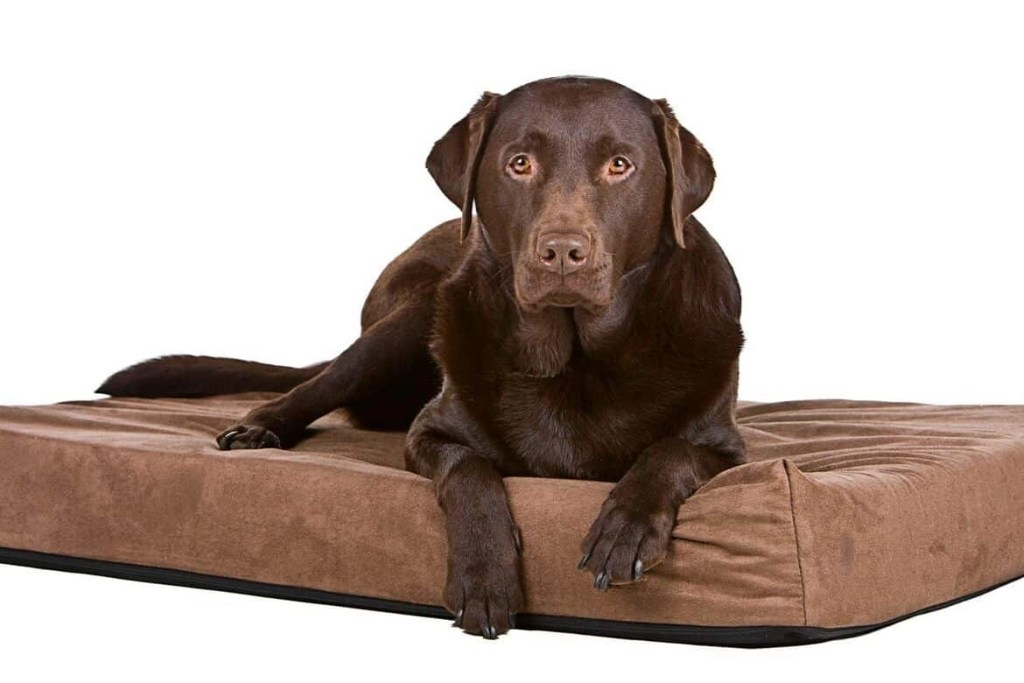 Best Orthopedic Dog Bed Reviews Featured Image