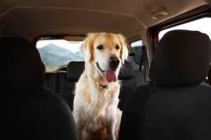 Best Seat Covers For Dog Hair Reviews Featured Image