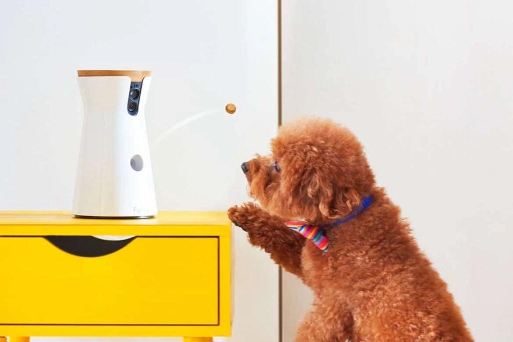 Furbo Dog Camera Reviews Featured Image