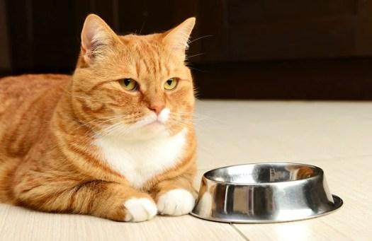 「cat eat」の画像検索結果