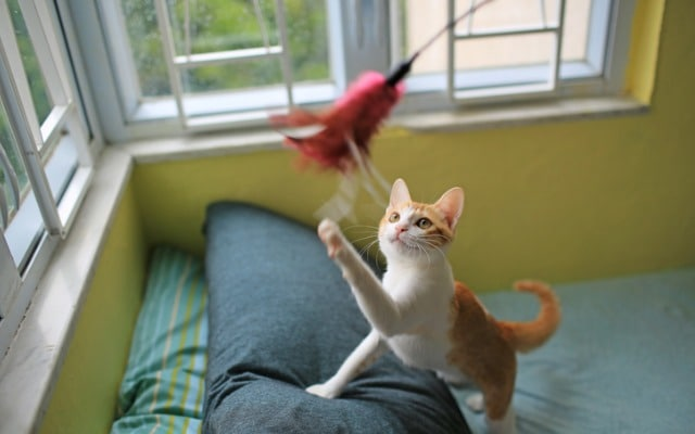Cara membaca bahasa tubuh kucing