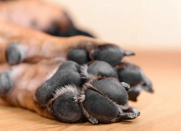 Dog Treatment Split Toenail