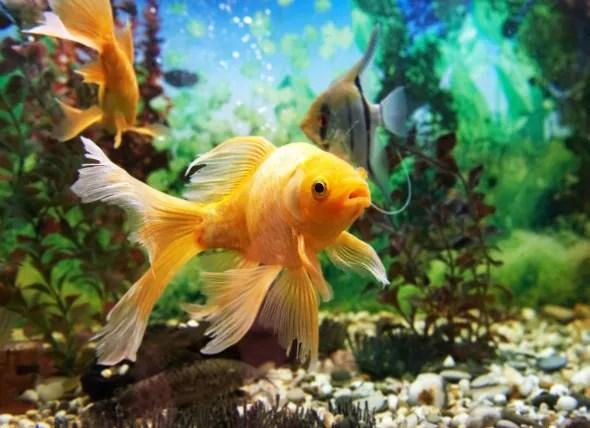 Pond Fish Tiny Creatures