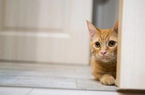 「cat alone」の画像検索結果