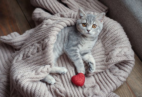 Valentines For Cats PetMD
