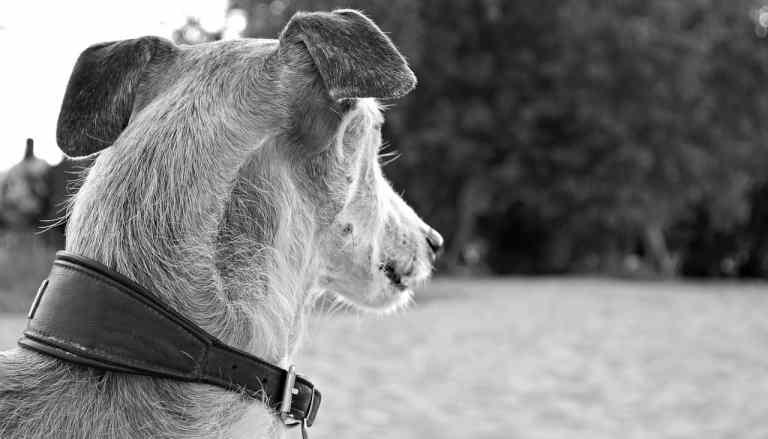 Hund mit Halsband von hinten aufgenommen