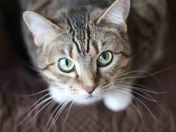Katze sieht von unten zum Fotografen auf