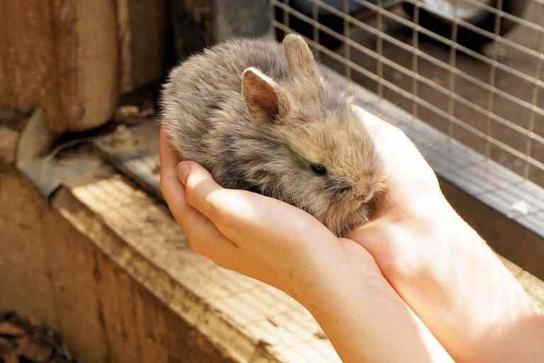 Kaninchen in Händen