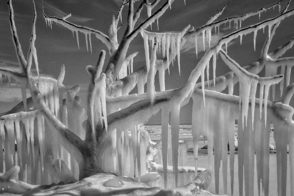 """Becca Foli's """"Ice Tree"""""""