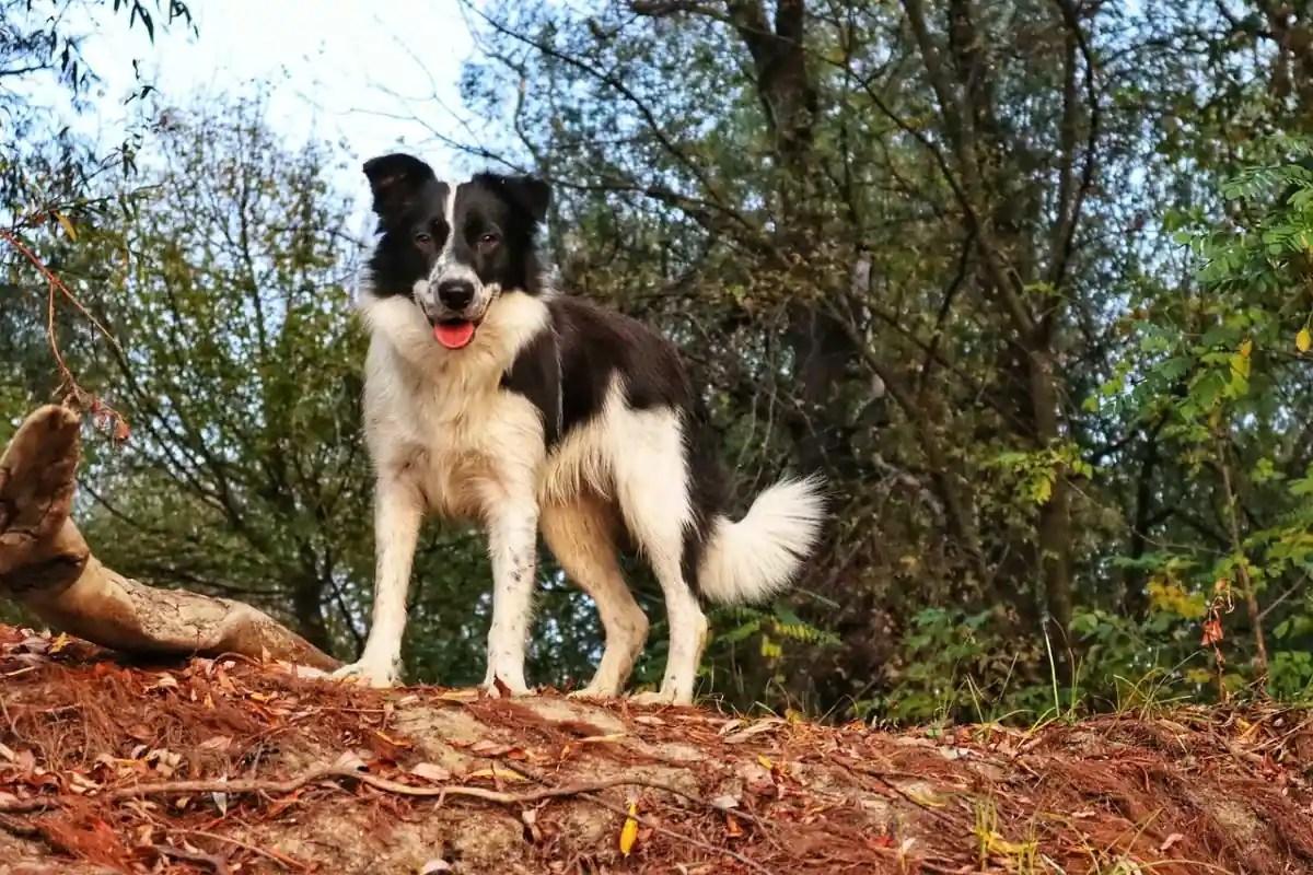 Kutyasétáltatás az erdőben