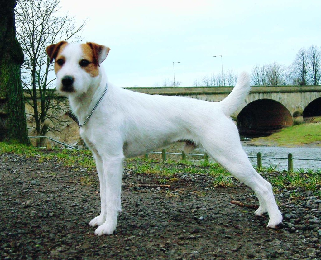 Family Dog Breeds Small Size Dogs