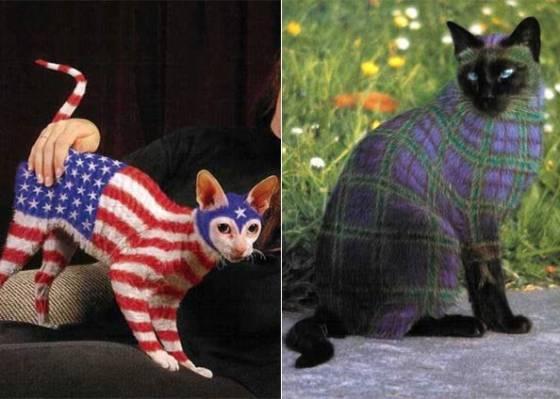 Gatos pintados alimentam polêmica entre internautas