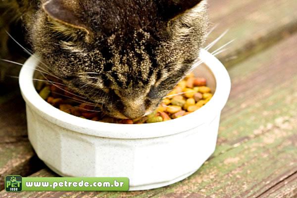 Dicas importantes de como receber um gatinho em sua casa