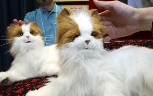 Gatos-robôs poderão cuidar de idosos britânicos dentro de três anos