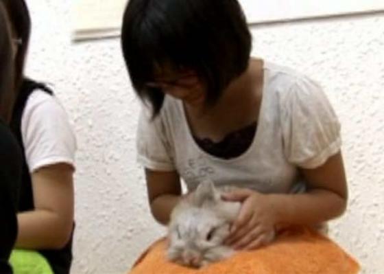 Japoneses pagam para acariciar coelhinhos