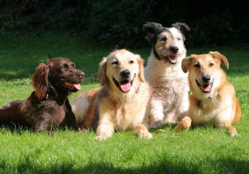 Como evitar o estresse em animais domésticos