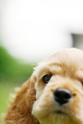 puppy-3