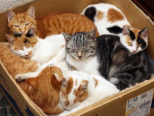 História do gato-doméstico
