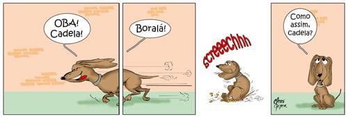 animais_de_rua13