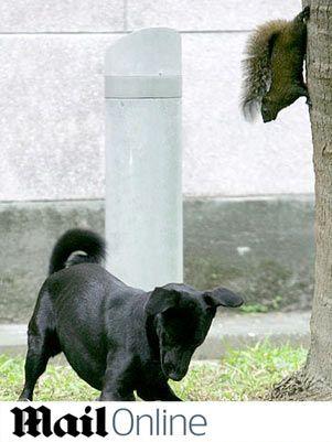 esquilo_cachorro