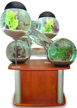 Labirinto para os peixes