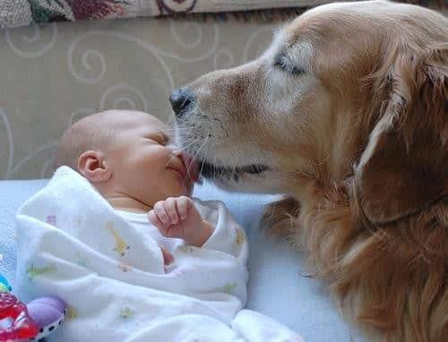 dog_baby