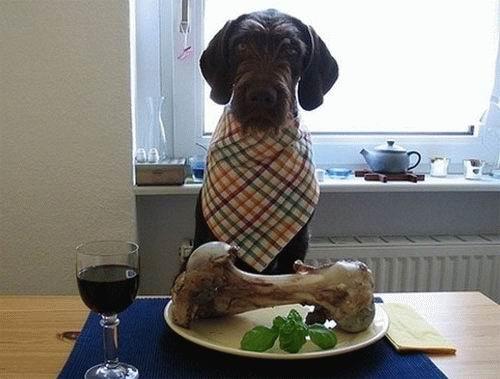 eating_dog2