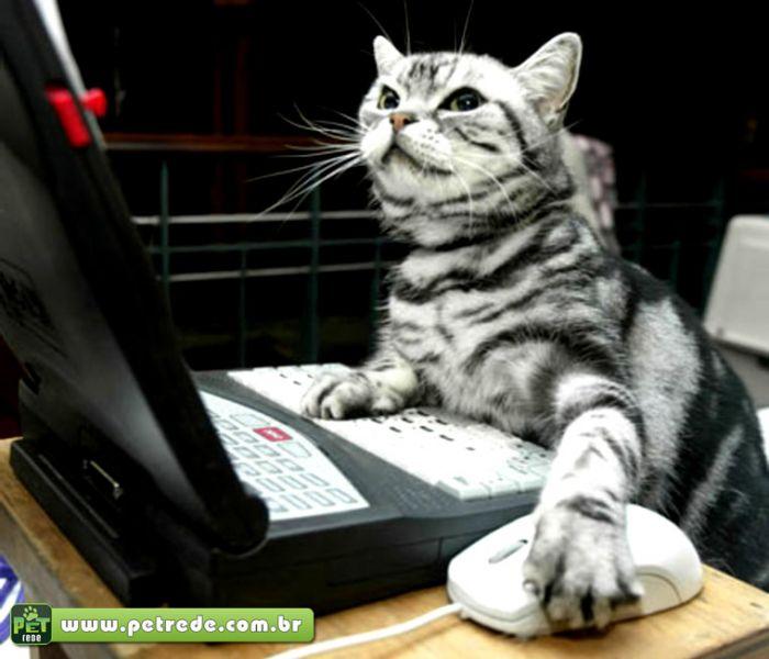 gato-computador-notebook-email-mensagem-trabalhando-petrede