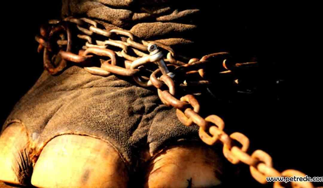 Com apoio de Tripoli, Comissão aprova circos sem animais